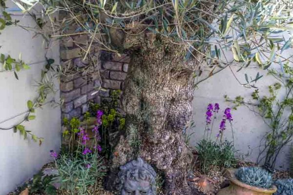 small-gardens-ireland-11