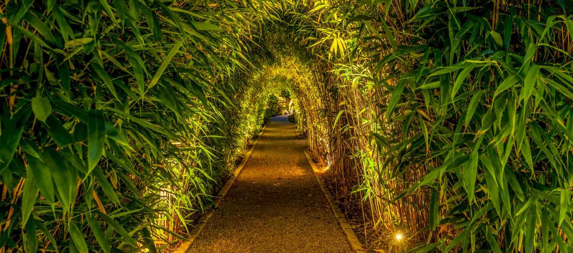 Bamboo-garden-tunnel-ireland